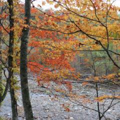 東広尾川の紅葉