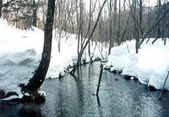 冬の東広尾川の支流