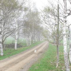 朝靄の牧場