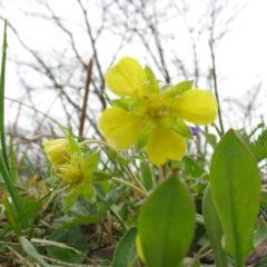春の花(名称不明)