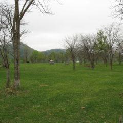 草地奥の疎林